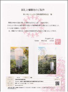 sakura植樹2