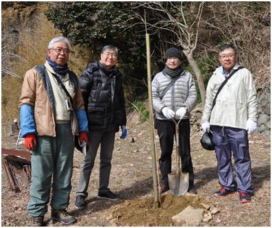 石巻さくら植樹写真3