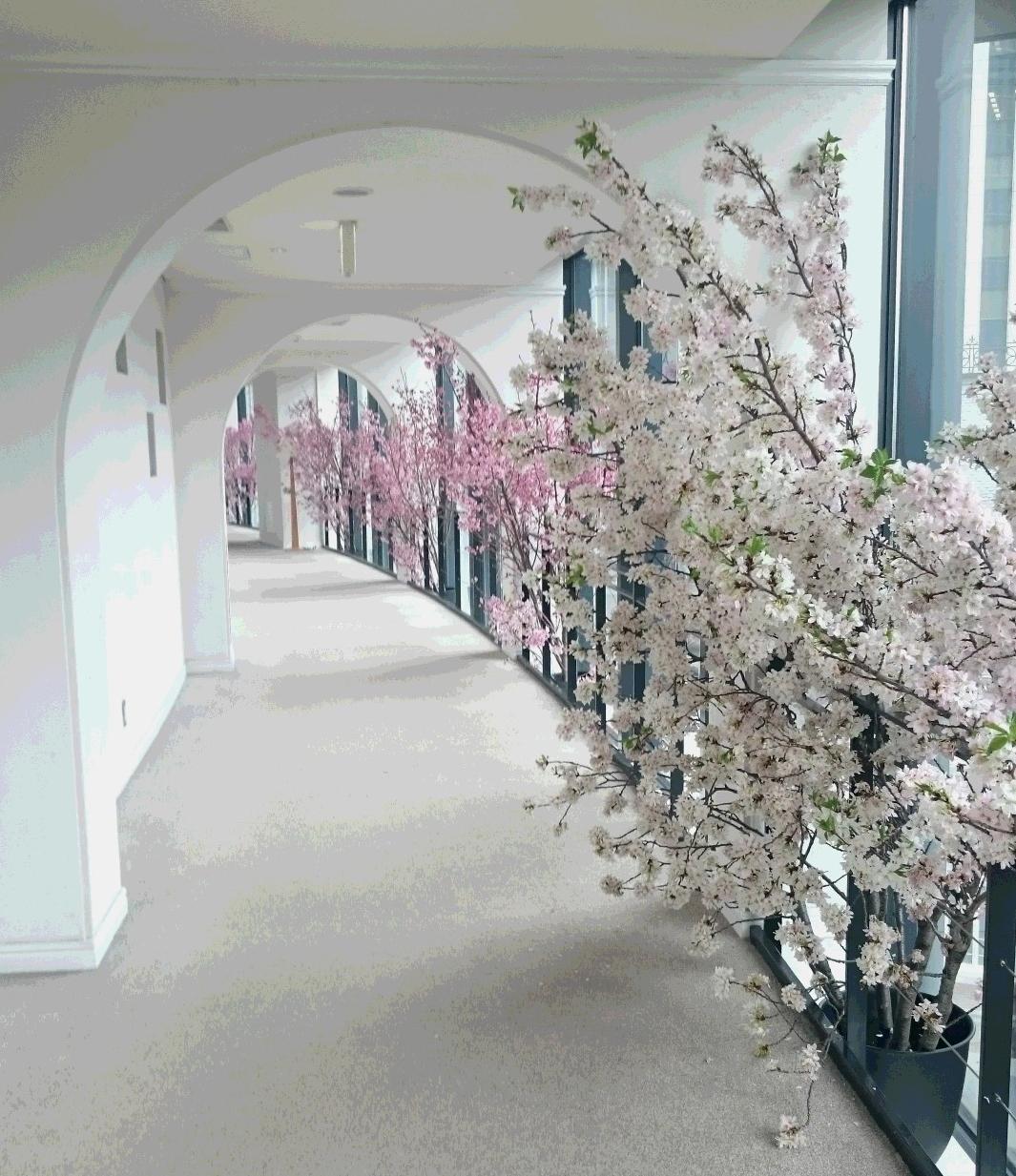 2804 桜回廊 投稿