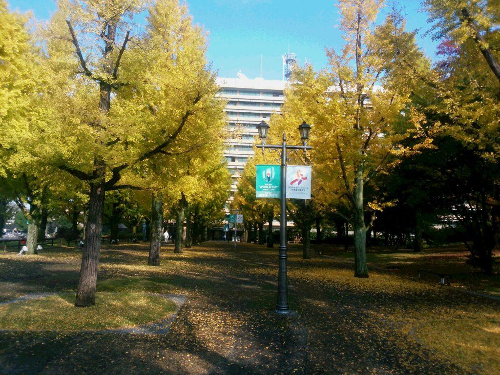 281214 熊本復興のため旅行に行った熊本県庁の銀杏並木 中国同友会三宅富士夫